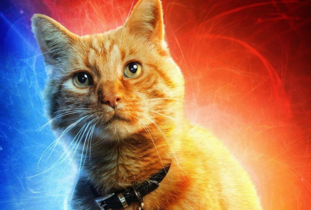 Why Captain Marvel's Cat Is More Important Than You Think